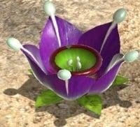 A Violet Candypop Bud.