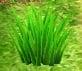 Pikmin Park grass.jpg