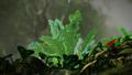 Eaten leaves.png
