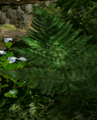 Ferns 1.png