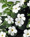 Pikmin flower.jpg