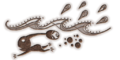 Formidable Oak drawing bud texture.png