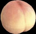 Mock bottom.png