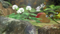 Garden of Hope preview.png