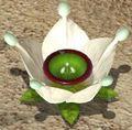 Ivory Candypop Bud P3.jpg