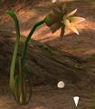 Burgeoning Spiderwort empty.png