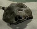Skull P1.png