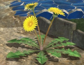 A group of Dandelions in Pikmin 3.