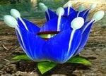 Lapis Lazuli Candypop Bud P3.jpg