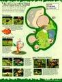 Nintendo Power 152 January 2002 31.jpg