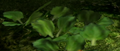 Fuzzy leaves.png