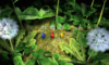 The Pikmin-themed Puzzle Swap puzzle on the Nintendo 3DS.