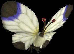 A White Spectralids.