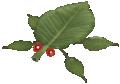 Skitter leaf.png