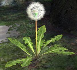 A Seeding Dandelion in Pikmin 2.