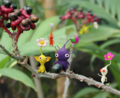 Pikmin family P2 group.png