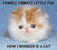 Pikipickles Cat User Image.jpg