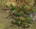Clover-like flower.png