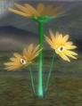 Creeping Chrysanthemum hiding.png