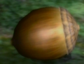 Armored Nut.png